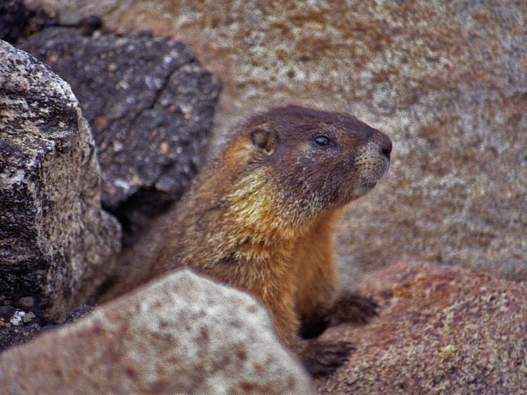 Groundhog Day-groundhog_phil.jpg