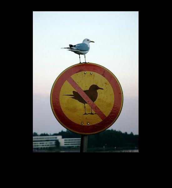 Funny and Geeky Cool Pics [3]-bird-no-bird-sign.jpg