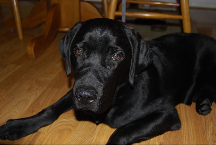 show us your dog-imageuploadedbytapatalk1363621090.625654.jpg