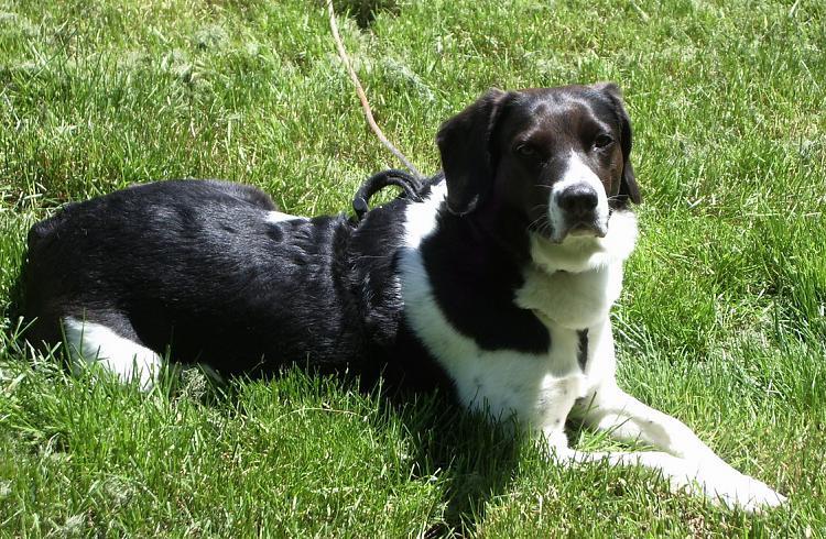 show us your dog-sunny-day-dot-doggie.jpg