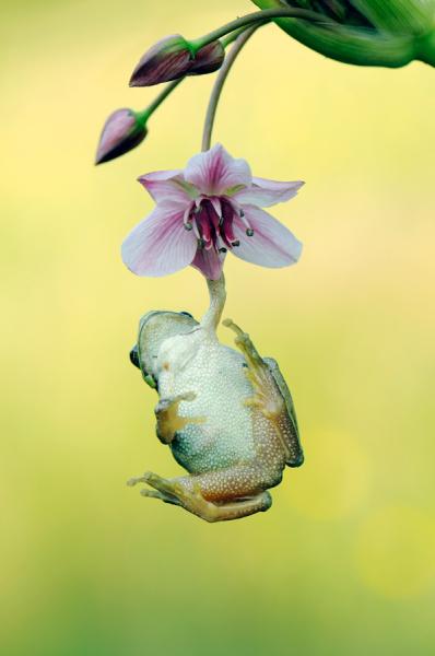 Today [11]-frogandorchid.jpg