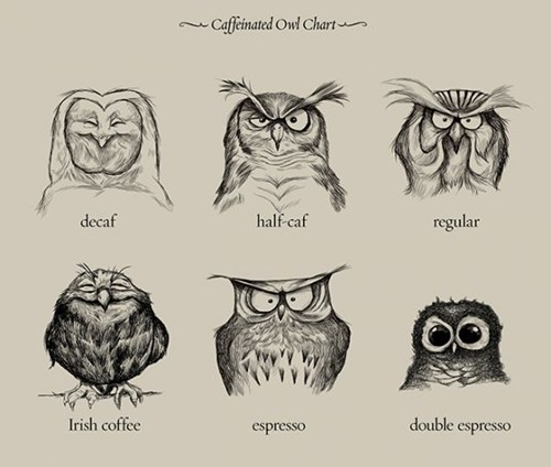 Funny and Geeky Cool Pics [3]-owl-coffee.jpg