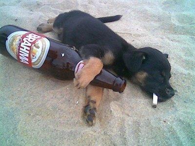 Happy Birthday A Guy-drinking_puppy.jpg