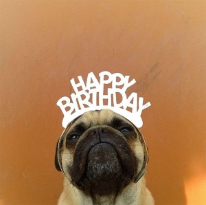 Happy Birthday linnemeyerhere-norm-pug.jpg