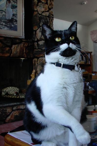 Show us your cats-bebe_proud.jpg