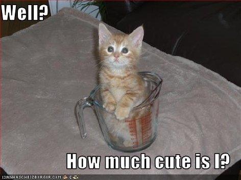 CATZ only.-cute_kitty.jpg