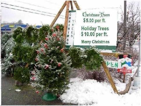 Funny and Geeky Cool Pics [3]-christmas-trees.jpg