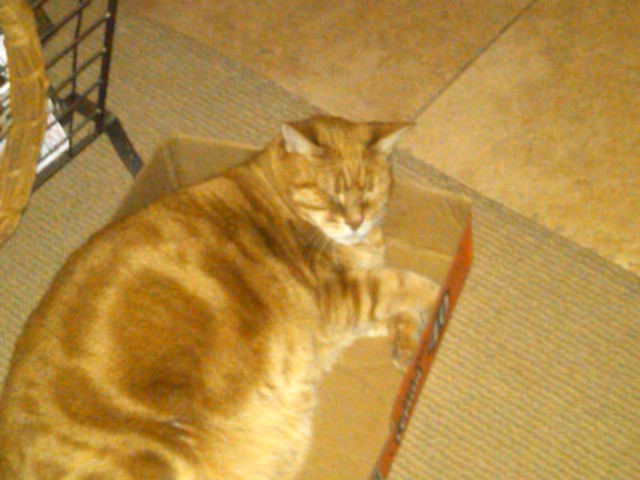 Show us your cats-phoenix-20110417-00011.jpg