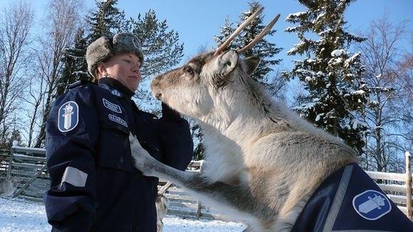 Funny and Geeky Cool Pics [3]-police_reindeer.jpg