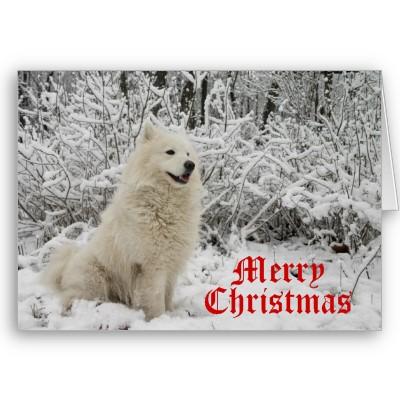 Happy Christmas-wolf_christmas_card_merry_christmas-p137729405903114989qqld_400.jpg
