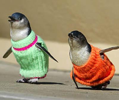 How's your weather-penguin-sweater.jpg