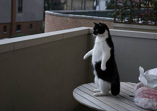 Show us your cats-penguin_cat.jpg