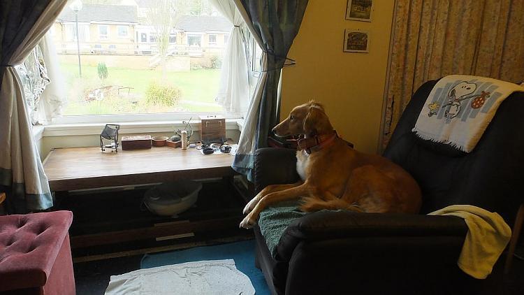 Show us your dogs!-poppy_2014-02-19_09-32-46.jpg
