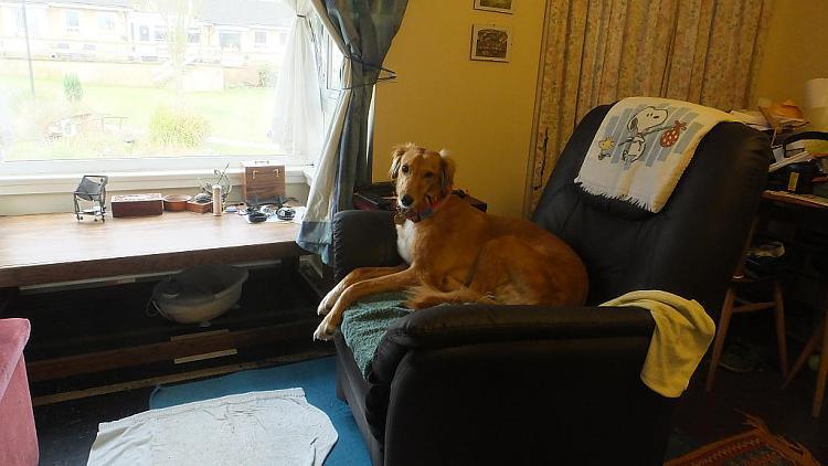 Show us your dogs!-poppy_2014-02-19_09-33-04.jpg