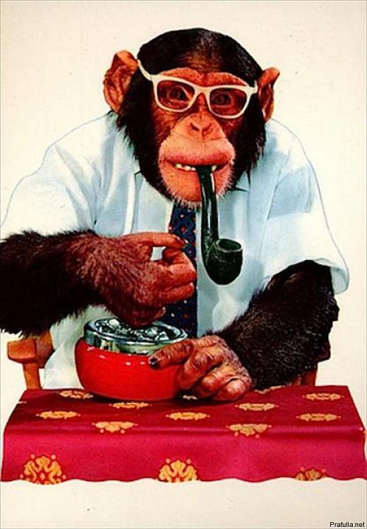 Reputation and Badges [10]-smoking_monkeys_01.jpg