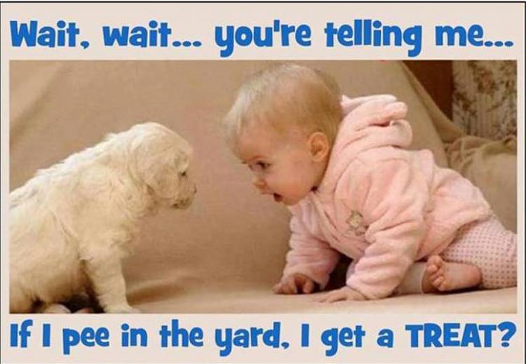 Funny and Geeky Cool Pics [3]-if-i-pee-yard.jpg