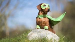 Reputation and Badges [10]-super-dog.jpg