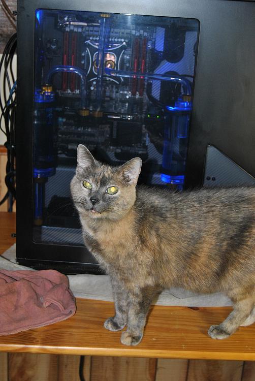 Show us your cats-dsc_0021.jpg
