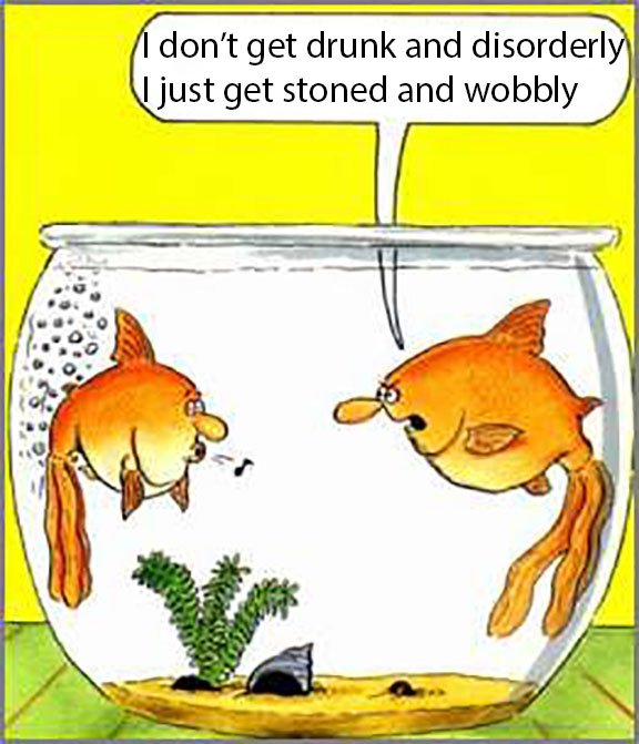 Jokes Thread [4]-wobbly-fish.jpg