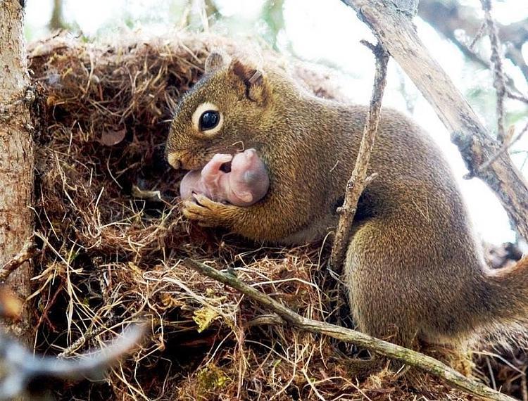 Cute animals-getimage-1-.jpg