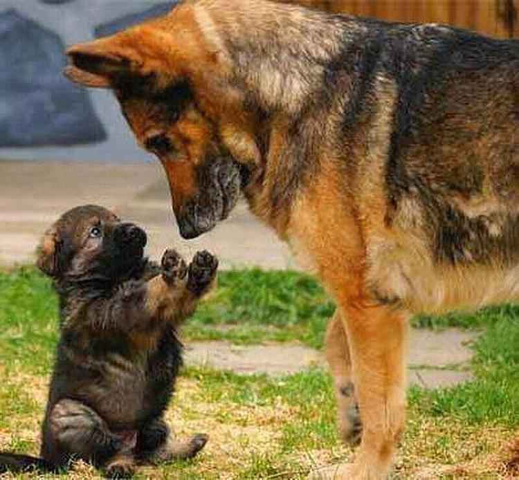 Cute animals-getimage-3-.jpg
