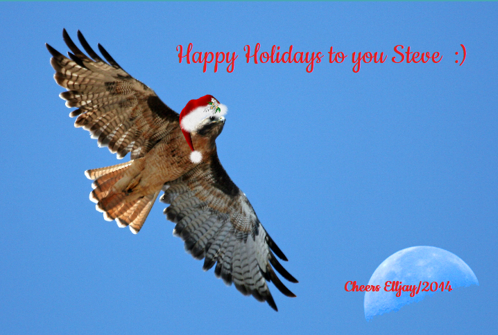 Got Hat?-happy-holidays-you-steve-2014.png
