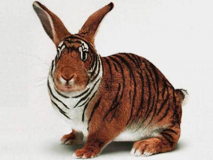 What do you think will happen next?-tiger-rabbit-animals-2960121-800-600.jpg