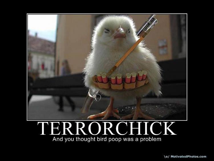 Motivation of the humourous-jihad_chick.jpg