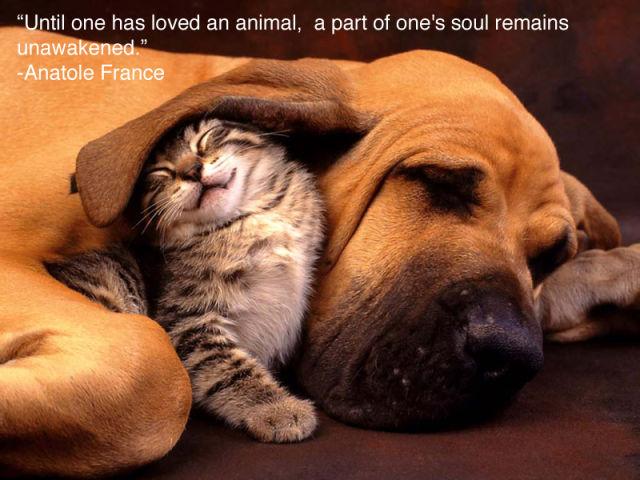Cute animals-tired-kitty-puppy.jpg