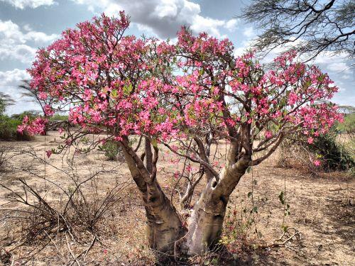 Keep One Change One [22]-desert_rose_mago_national_park.jpg