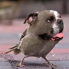 Keep One Change One [23]-bird-dog.jpg