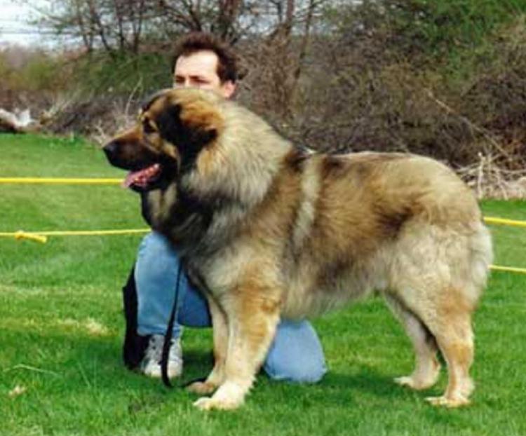 Dogs-2016-01-17_1255.jpg