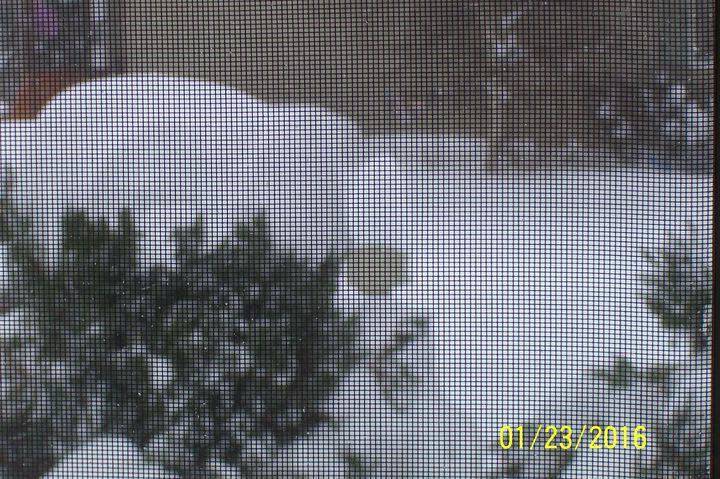 Snowmageddon: Jan 23rd 2016, PA - DE - VA - MD - NJ - NY - MA - CT- RI-100_3386-copy.jpg