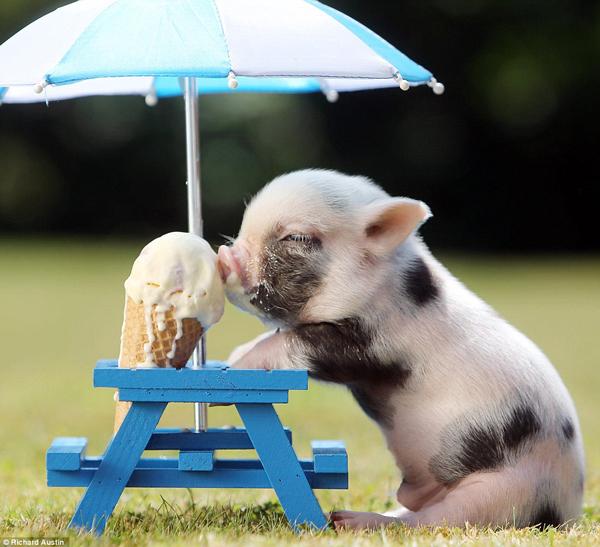 Happy Birthday Barroness-pig.jpg