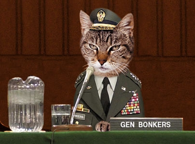 Today-cat-general.jpg