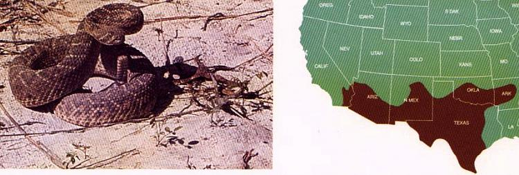 Groundhog Day-rattlesnake_diamondback.jpg