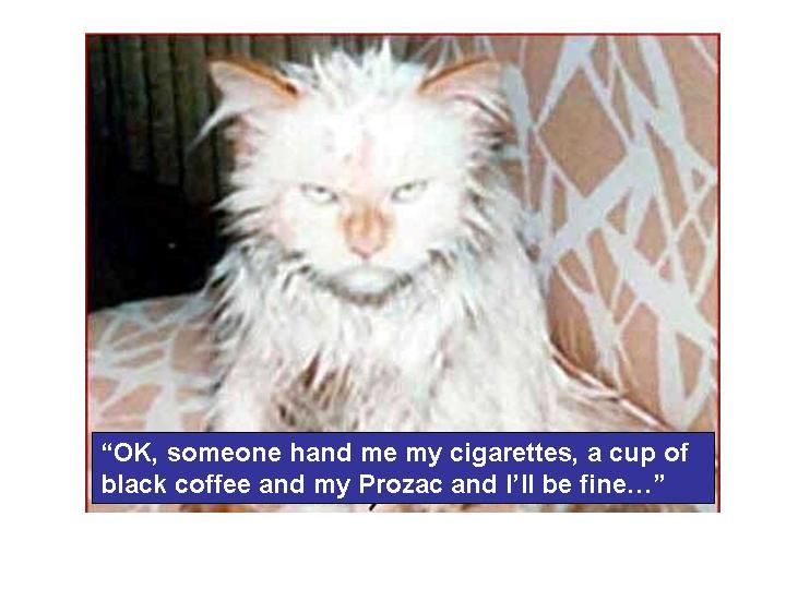 Today [2]-cat_bath.jpg