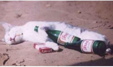 Happy birthday garysgold-drunkcat.jpg