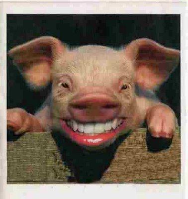 Name:  pig-lipstick.jpg Views: 1184 Size:  26.6 KB