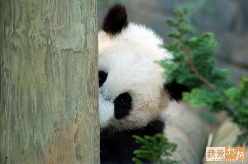 Supporters Badge-panda2.jpg