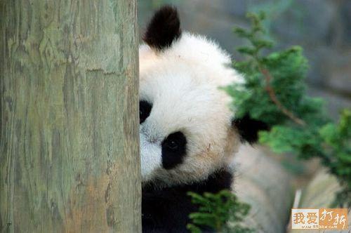 Your First Reputation-panda2.jpg