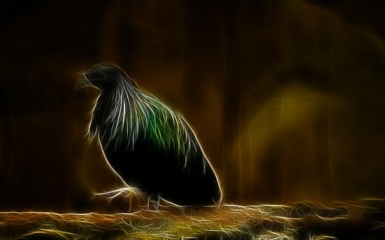 Custom Windows 7 Wallpapers - The Continuing Saga-colorful_pigeon_1440x900_487.jpg