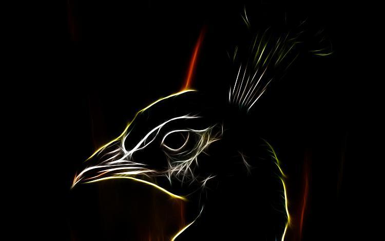 Custom Windows 7 Wallpapers - The Continuing Saga-peafowl_-_peacock_high_definition_wallpaper.jpg
