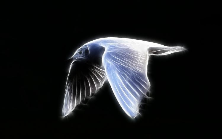 Custom Windows 7 Wallpapers - The Continuing Saga-seagull-flying-side.jpg