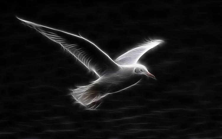 Custom Windows 7 Wallpapers - The Continuing Saga-white-seagull-flying.jpg