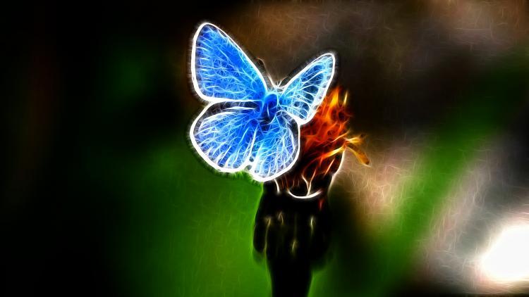 Custom Made Wallpapers-butterfly-2.jpg