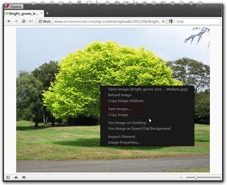 -bright_green_tree_-_waikato.jpg-2592-1944-opera.png