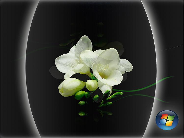 Custom Windows 7 Wallpapers [continued]-white-flower_edited.jpg