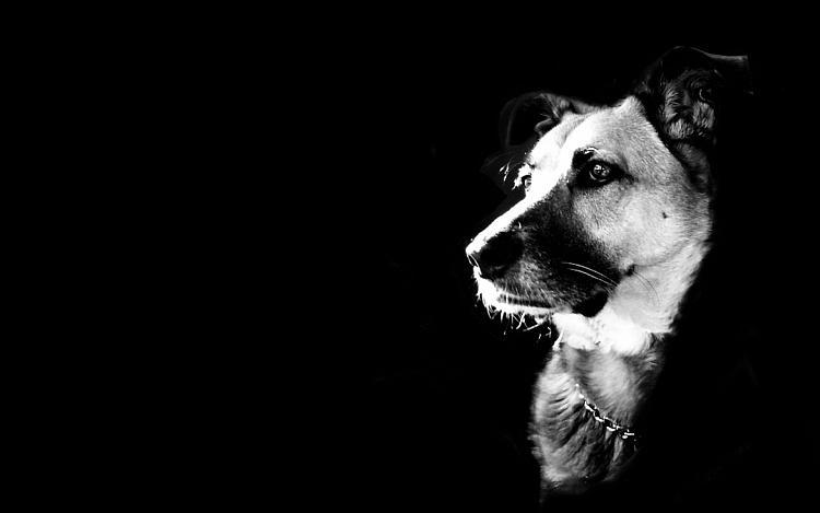 Post your Start-up screen-backgrounds-black-wallpaper-dogs.jpg