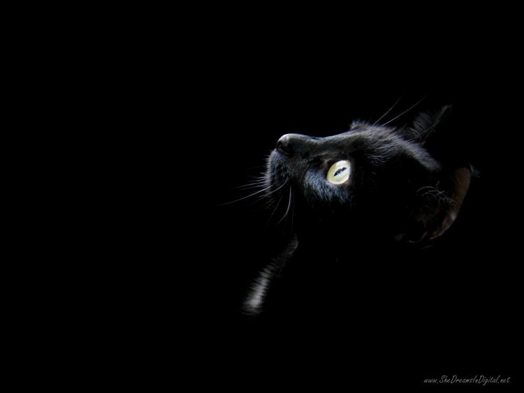 Post your Start-up screen-black_wallpaper_cat_head-1024x768.jpg